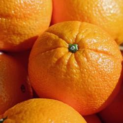 Orange (Citrus aurantium)